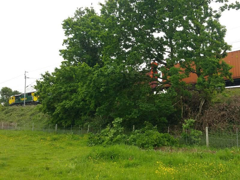 Tree works on West Coast Mainline for PSU project