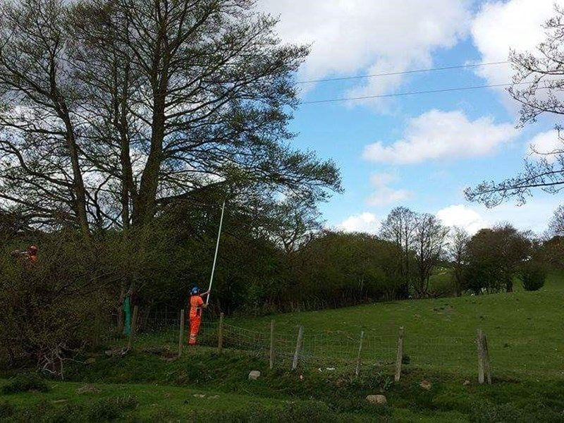 Live line trune pruning operations utilising tested insulated pole saws in order to reduce customer shutdown distruption